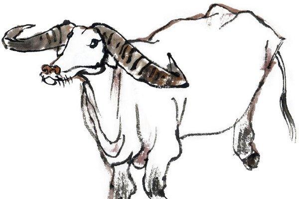 国画牛的绘画步骤