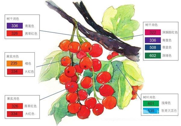 水彩颜色吸引视点林叶间的醋栗绘画步骤