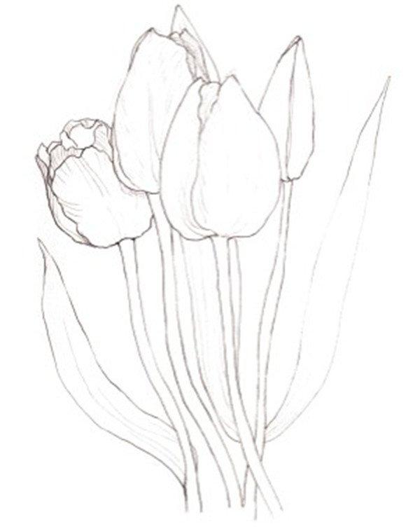 水彩郁金香的绘画步骤一