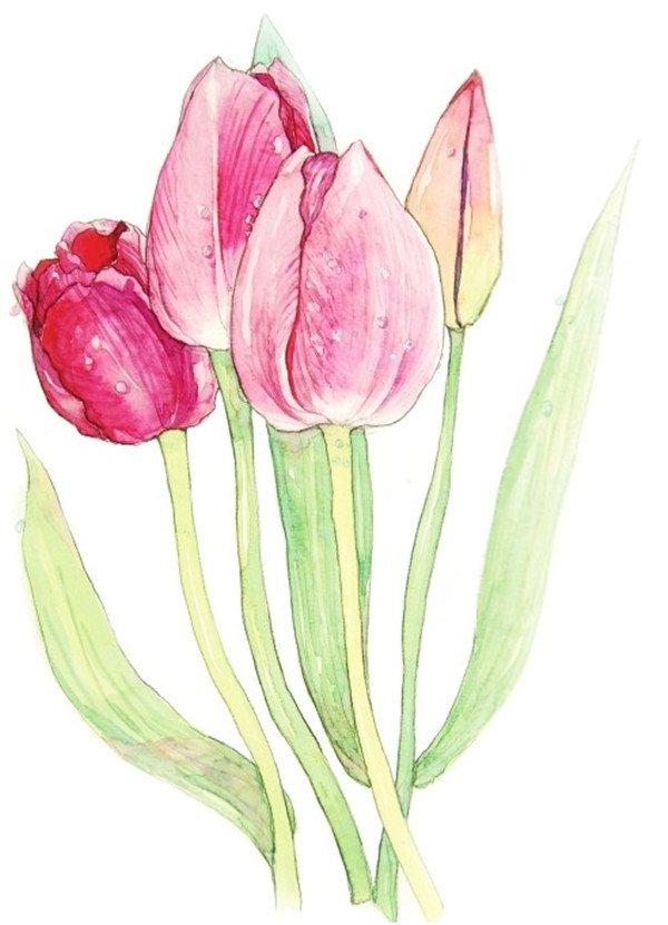 水彩郁金香的绘画教程(4)