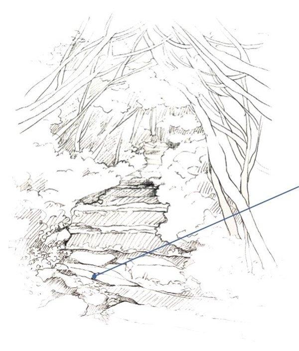 手绘山林树丛线稿