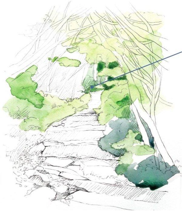 水彩小径的绘画步骤(3)