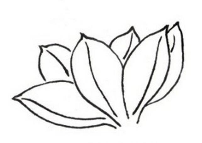 白描马兰花的绘画技法_国画教程_学画画_我爱画画网
