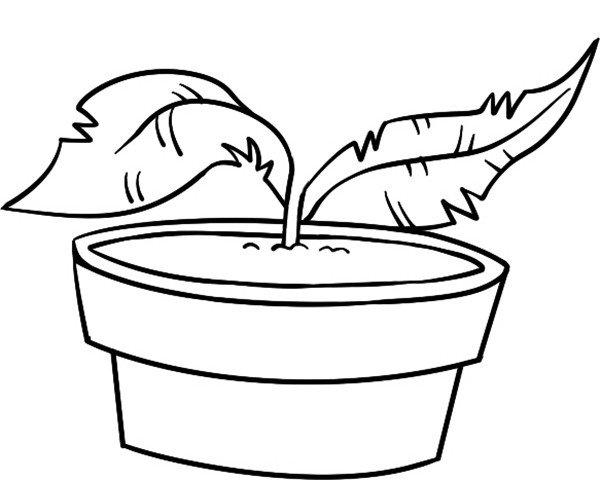 趣味简笔画:恐怖的食人草绘画步骤二-趣味简笔画恐怖的食人草 2