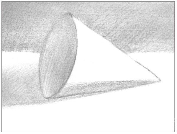 素描圆锥体的绘画步骤 6图片