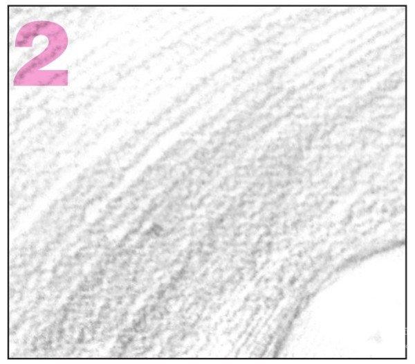 学画画 素描教程 素描石膏像 > 素描圆柱体的绘画步骤(7)      7,对圆