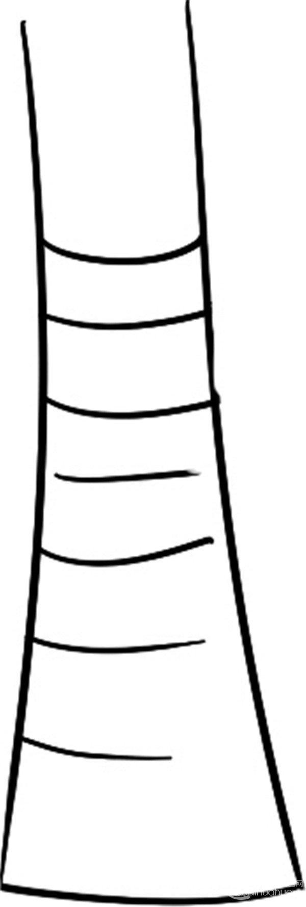 趣味简笔画:帅气的椰子树绘画步骤(2)