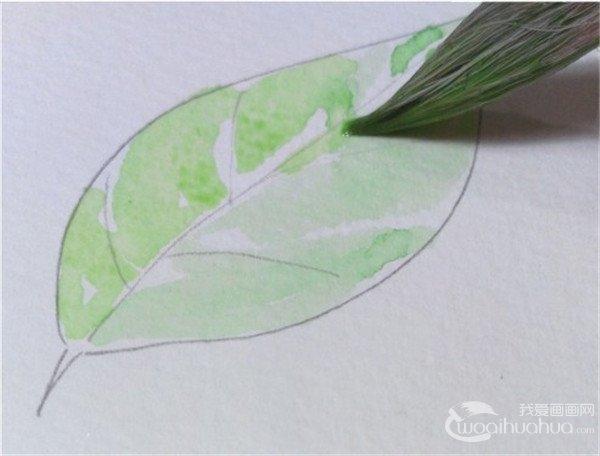 水彩画 树叶直接留白