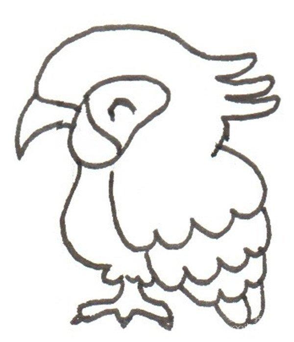 卡通画:鹦鹉的绘画步骤(3)