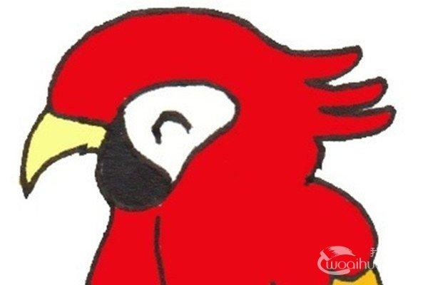 卡通画:鹦鹉的绘画步骤