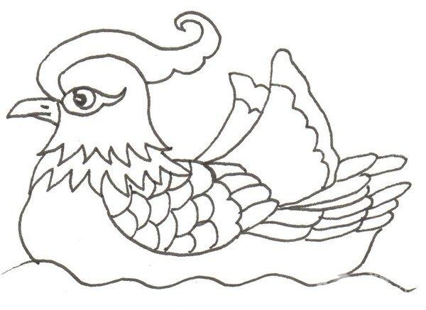 卡通画:鸳鸯的绘画步骤(2)