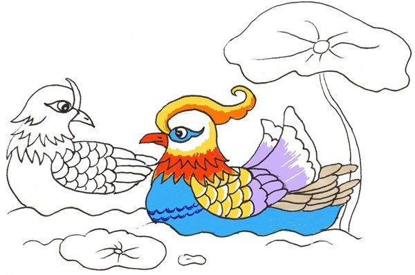 卡通画:鸳鸯的绘画步骤(3)
