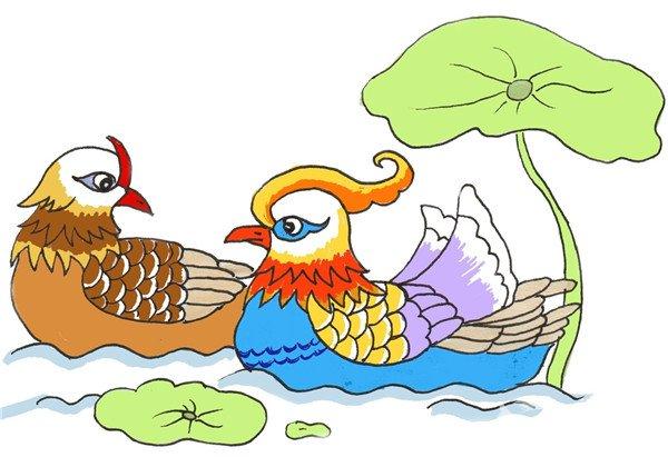 卡通画:鸳鸯的绘画步骤(4)