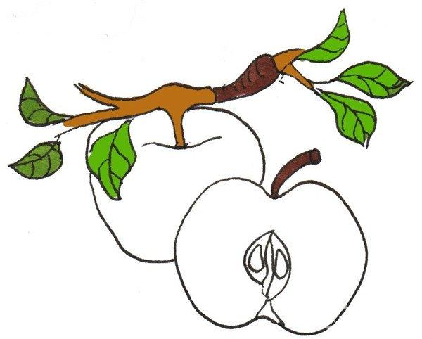 卡通画:红苹果的绘画技法(3)_儿童画教程_学画画_我爱