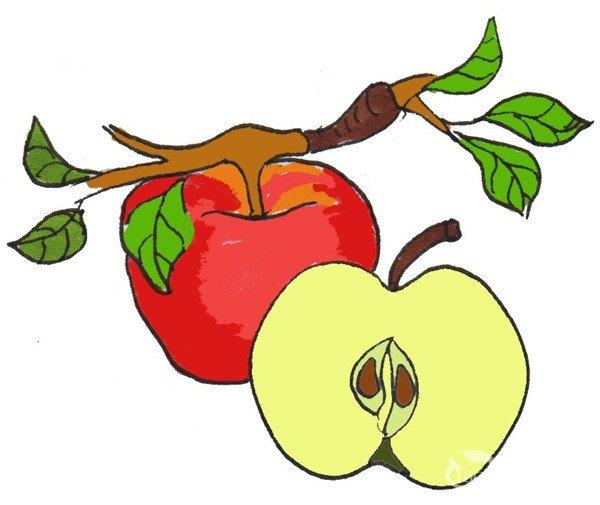 红苹果的绘画技法(3)                      ⑥给树枝涂上棕色,给叶子