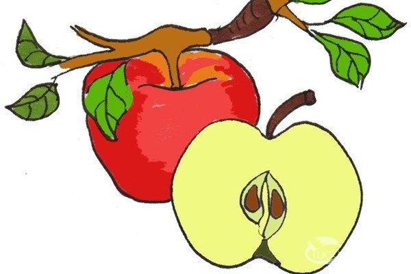 卡通画:红苹果的绘画技法