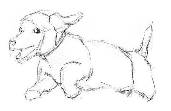 素描动物 > 素描:小狗的绘画步骤      现在的家庭大都喜好养宠物狗