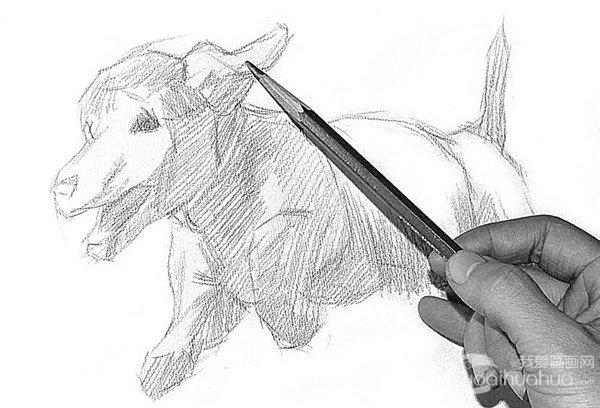 步骤1 2、大概画出小狗的结构部分。  素描小狗的绘画步骤2 3、换6B铅笔顺着小狗的结构,找出阳光下小狗的明暗部分,以大块面形式先概括出小狗的基形态。  素描小狗的绘画步骤3 4、再补充画面的明暗调不足的部分。  素描小狗的绘画步骤4