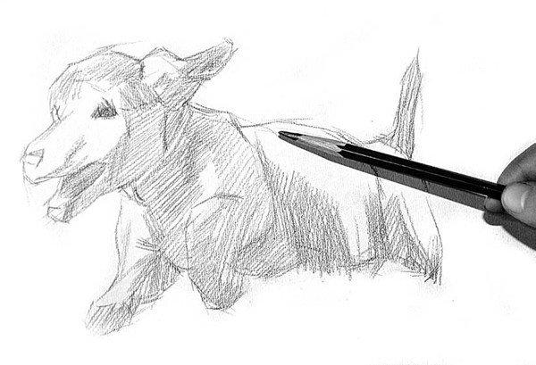 学画画 素描教程 素描动物 > 素描:小狗的绘画步骤      2,大概画出小