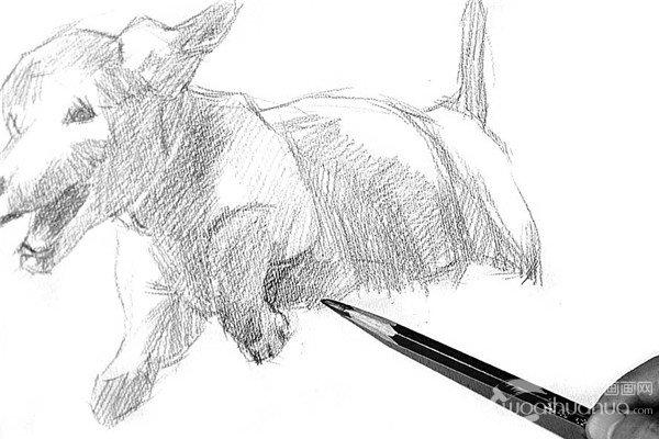 素描:小狗的绘画步骤(2)_素描教程_学画画_我爱画画网