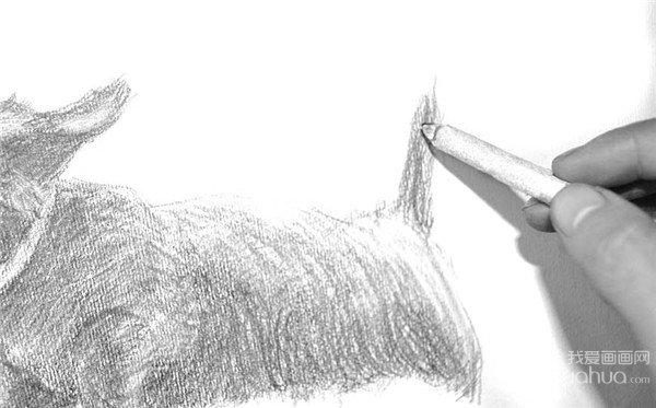 10、用橡皮泥修改错的部分,或者是需要表现翘起的小狗毛。  素描小狗的绘画步骤10 11、用擦笔涂抹小狗头部,让铅笔粉彻底融进去,为下一步的塑造做好准备。  素描小狗的绘画步骤11 12、对尾巴的部分进行涂抹,切记,直直的感觉一定要有。  素描小狗的绘画步骤12 13、深入细致地刻画小狗的皮肤和细毛,通过擦、涂抹、画等各种技法表现质感。  素描小狗的绘画步骤13 14、小狗脊背的塑造要结实有力,线条细腻且需要干脆利落。  素描小狗的绘画步骤14