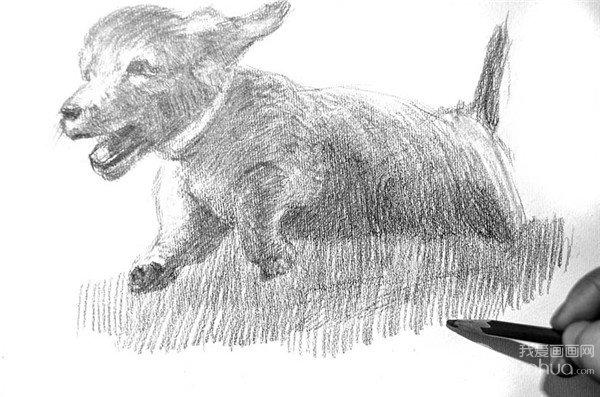 学画画 素描教程 素描动物 > 素描:小狗的绘画步骤(4)      15,用6b