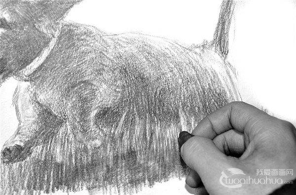 15、用6B、8B铅笔先粗略地画上草坪,注意草的不规则生长。  素描小狗的绘画步骤15 16、用擦笔对草地部分进行涂抹,表现小狗的阴影部分。  素描小狗的绘画步骤16 17、再用橡皮泥擦拭,擦出草的受光部分。  素描小狗的绘画步骤17 18、小狗四周都需要表现到位,只有如此,草的柔软感觉才能体现出来。  素描小狗的绘画步骤18