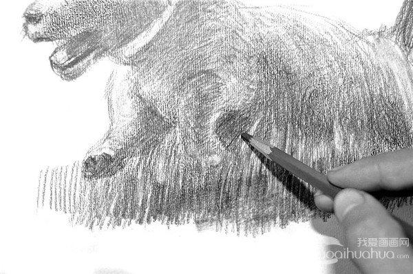 19、在调整画面时,还可能会用铅笔继续刻画草的质感。  素描小狗的绘画步骤19 20、小狗抬起的前脚,可爱之极,注意其动态的表现。  素描小狗的绘画步骤20 21、用橡皮泥在狗的脊梁上擦拭几下,表示光照部分,也突出小狗可爱的绒毛。  素描小狗的绘画步骤21  完成 通过认真调整,一幅完整的素描便完成了。
