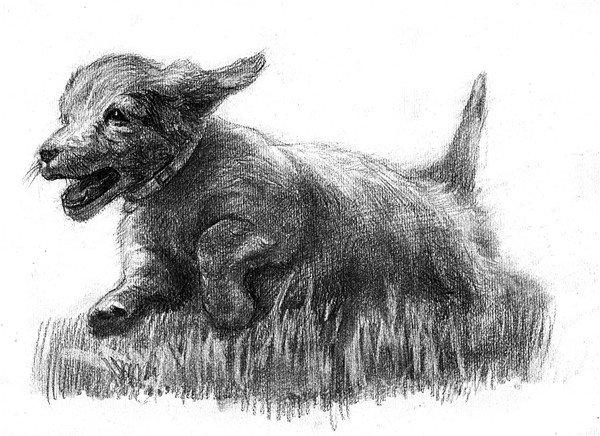 学画画 素描教程 素描动物 > 素描:小狗的绘画步骤(5)      19,在调整