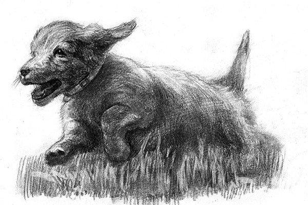 素描:小狗的绘画步骤