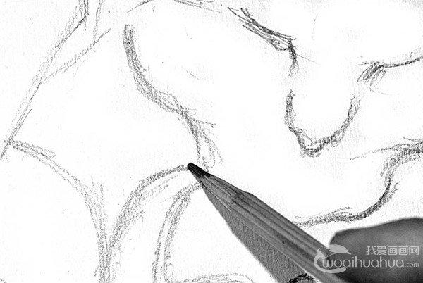 学画画 素描教程 素描动物 > 素描:小猫的绘画步骤      2,从上往下画