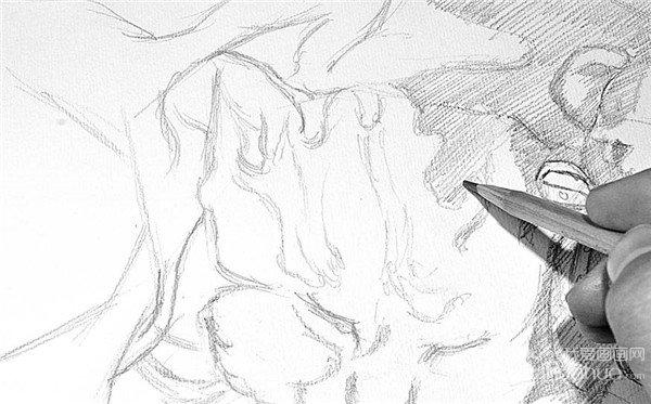 学画画 素描教程 素描动物 > 素描:小猫的绘画步骤(3)      10,仍然从
