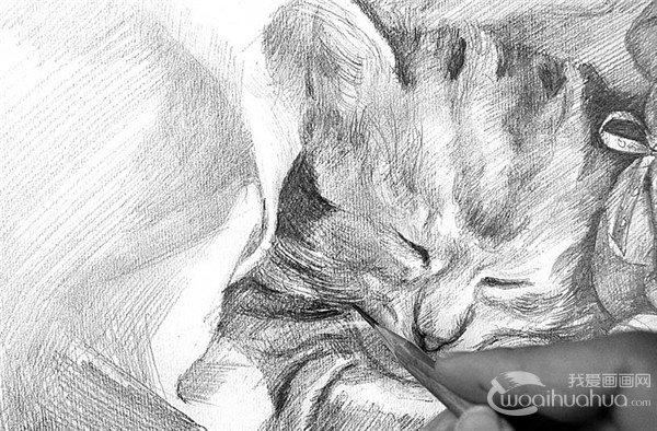 素描 小猫的绘画步骤 5