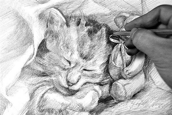 素描:小猫的绘画步骤(5)_素描教程_学画画_我爱画画网