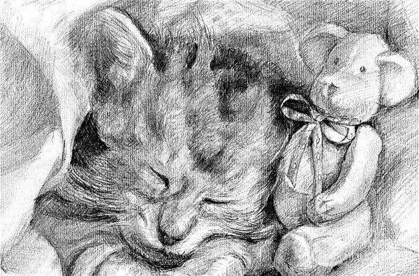 素描:小猫的绘画步骤(6)