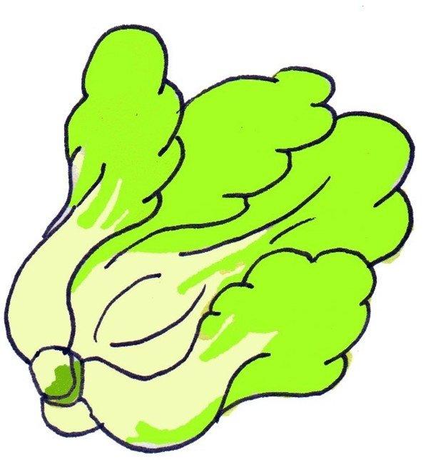 卡通画:大白菜的绘画步骤(4)