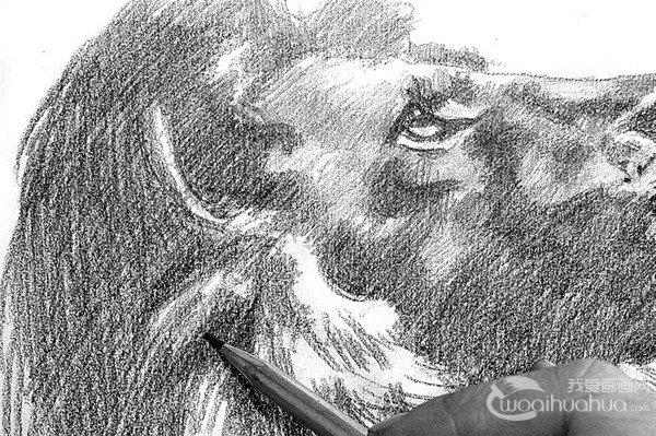 15、继续加深狮子下巴暗部的地方。  素描狮子的绘画步骤15 16、进一步丰富狮子两鬓的毛发,逐渐增加调子的层次。  素描狮子的绘画步骤16 17、虚化脖子部分的毛发,拉开虚实对比。  素描狮子的绘画步骤17