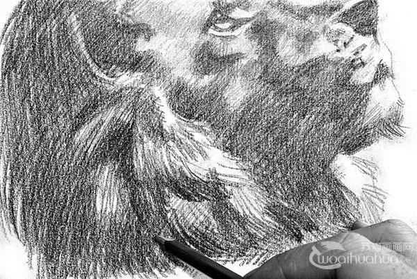 素描:狮子的绘画步骤(4)