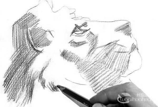 学画画 素描教程 素描动物 > 素描:狮子的绘画步骤(2)             &n