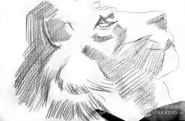 素描:狮子的绘画步骤(2)