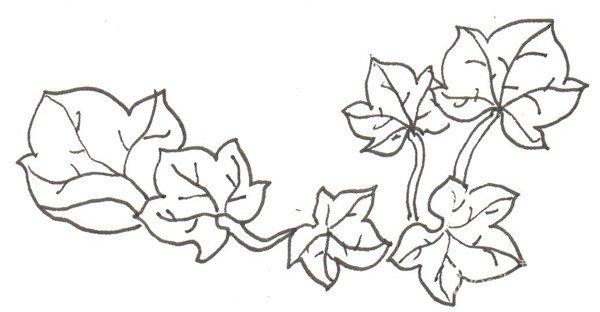 南瓜的 步骤    ①先画出一片叶子.