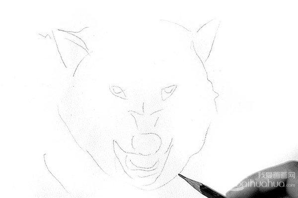 素描:狼的绘画步骤