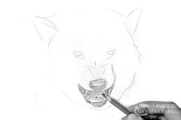 学画画 素描教程 素描动物 > 素描:狼的绘画步骤      在古代,人们