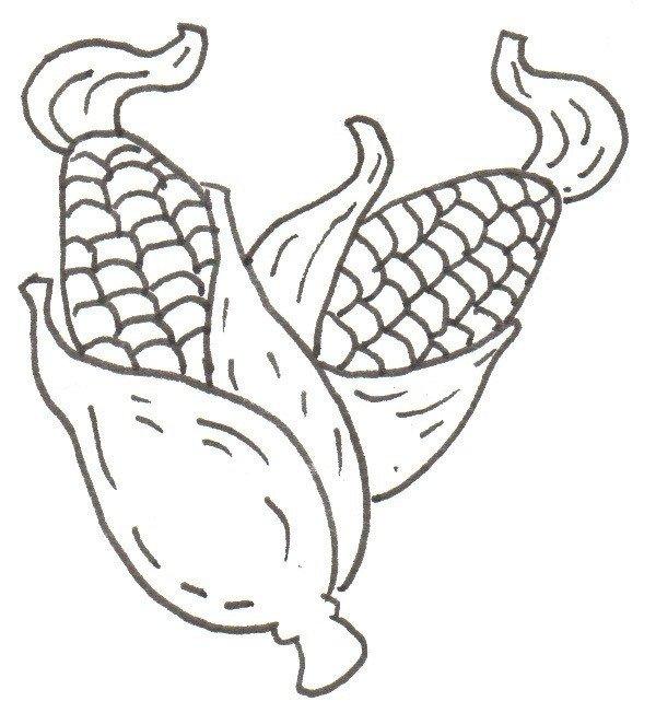 卡通画玉米的绘画步骤(2)