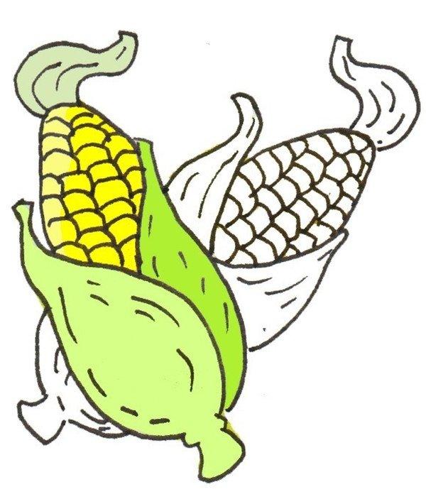 卡通画玉米的绘画步骤(3)