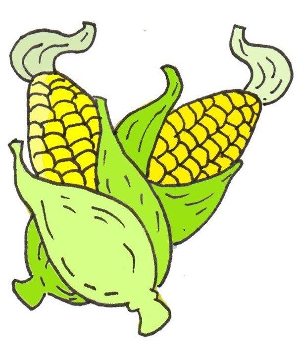 卡通画玉米的绘画步骤(4)