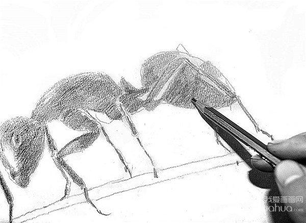 学画画 素描教程 素描动物 > 素描小蚂蚁的绘画步骤(2)      4,用铅笔