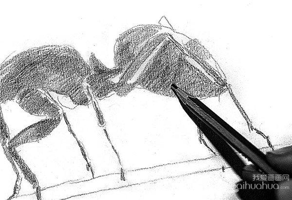 素描小蚂蚁的绘画步骤(3)_素描教程_学画画_我爱画画网