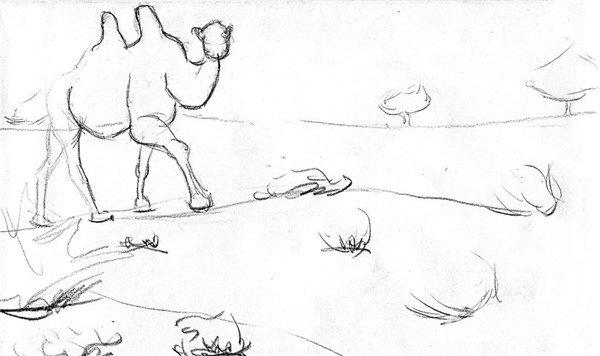 素描:骆驼的绘画步骤(2)