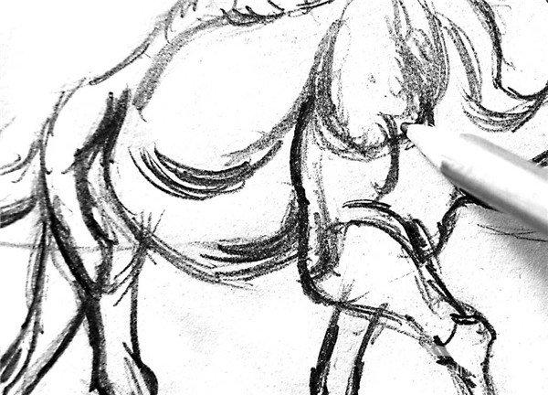 学画画 素描教程 素描动物 > 素描:骆驼的绘画步骤(2)      4,骆驼与
